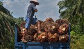 Indonesia president vows to fight EU palm oil rules