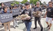 S Korea dog meat protesters hounded by farmers
