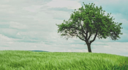 Seeing greenery reduces cravings for alcohol