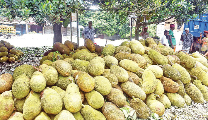 Traders put on display Jackfruits for sale
