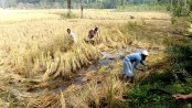 DCs asked to procure rice directly from farmers