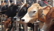 Govt to bar entry of cattle from India ahead of Eid-ul-Azha