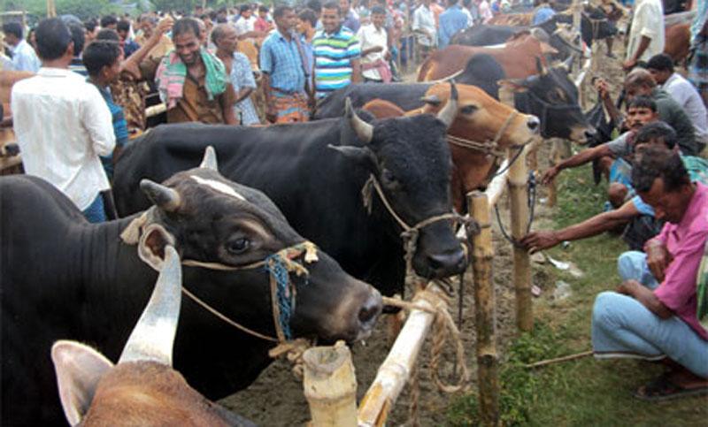 24 cattle markets in capital during Eid-ul-Azha