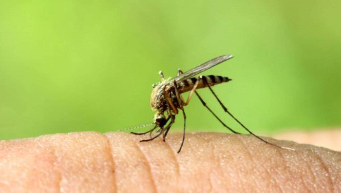 Anti-mosquito drive from July 25: LGRD Minister