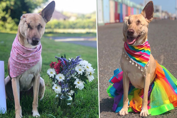 Miracle dog survived being shot 17 times