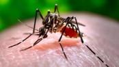 So far 5 die in dengue fever in capital: DGHS