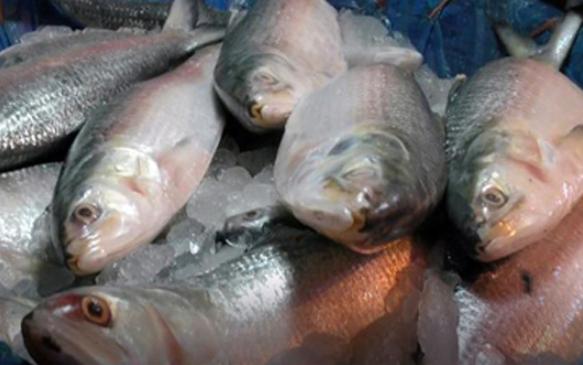 National Fisheries Week being observed