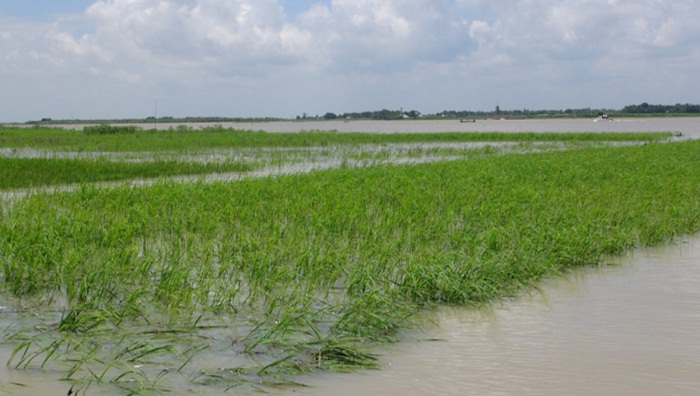 Villages, cropland flooded in Faridpur