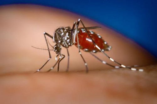 Dengue outbreak: DNCC opens hotline