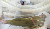 561 more dengue patients hospitalised in 24 hrs