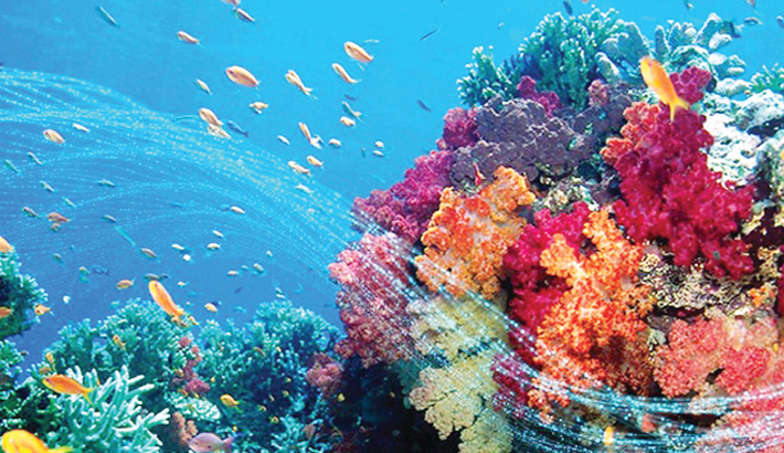 Ocean acidification and its effects