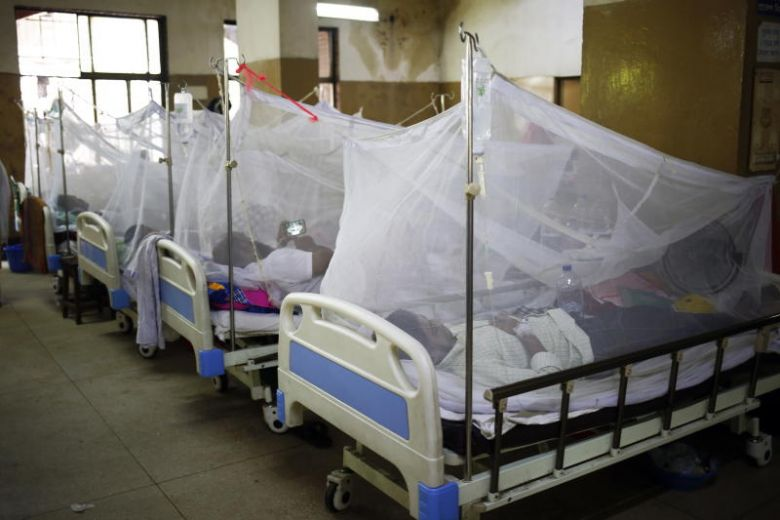 Dengue patients now in more than 50 districts
