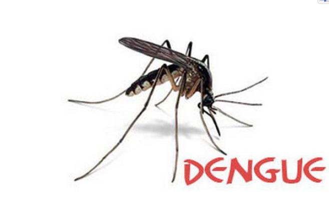 UAMCH launches anti-dengue campaign
