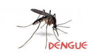 No respite from dengue; 1,477 more cases reported in 24 hrs