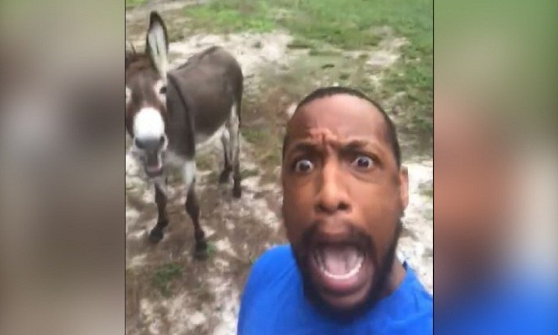 Man sings Circle of Life with his donkey, tickles people's funny bone