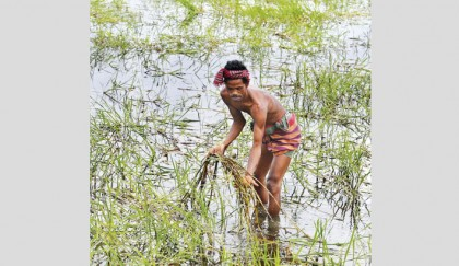 Flood-Affected Farmers : No Respite In Sight