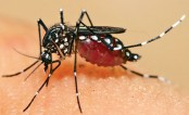 'Source of dengue must be destroyed'