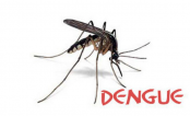 'Imams can create awareness about dengue'