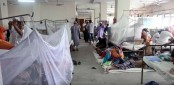 2,065 dengue patients hospitalised in 24 hours