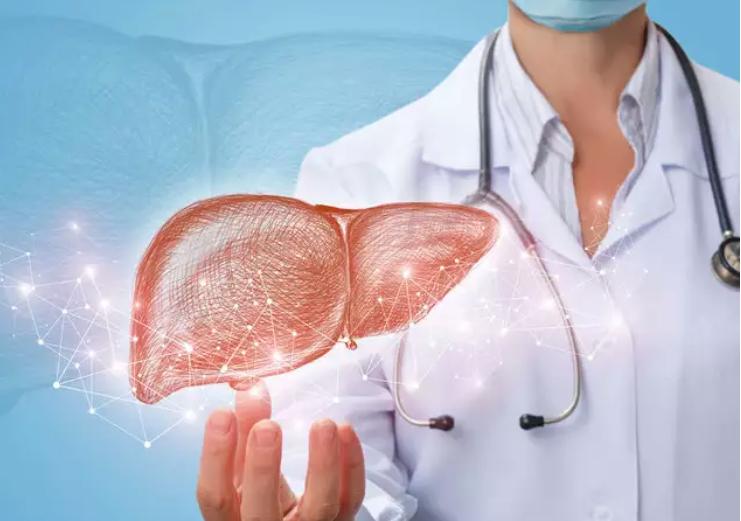 Scientists grow bioengineered mini human livers to study therapies