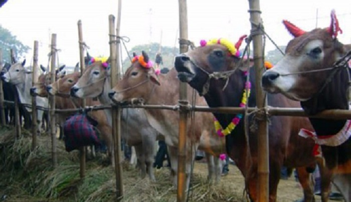 24 cattle markets to begin in capital Wednesday