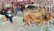Sale of sacrificial animals goes online