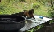 Chimp 'washes clothes' in bizarre clip that's left Twitter impressed