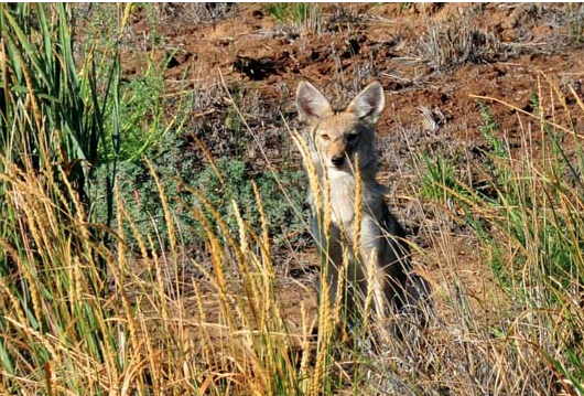 Trump administration re-authorizes 'cyanide bombs' to kill wildlife