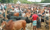 Crisis of sacrificial animals feared in Cox's Bazar