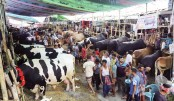 Cattle markets buzzing with buyers, sellers