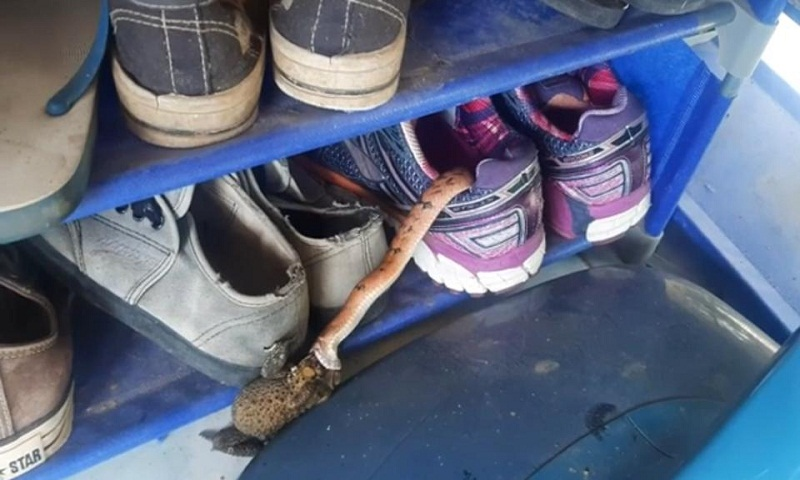 Woman finds snake in her shoe
