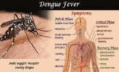 Everything you need to know about dengue shock syndrome