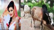 Pori Moni sacrifices four cows at FDC