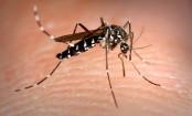 Ayurvedic ways to keep mosquitoes away this monsoon