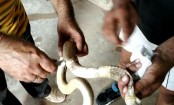 Odisha man takes injured snake to hospital, registers it as 7-year-old male