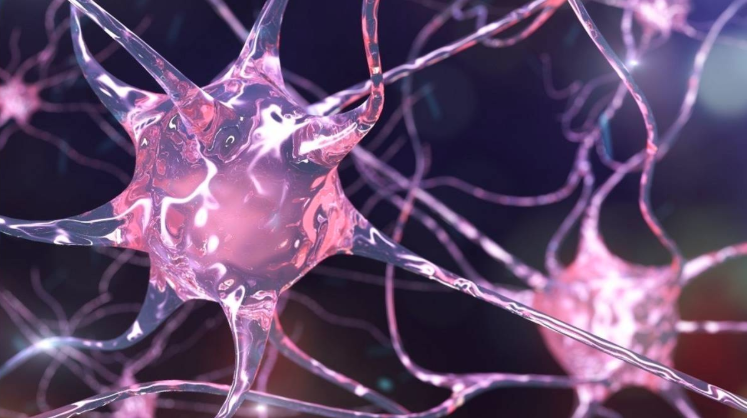 US scientists find how brain cells regulate memories in mice study