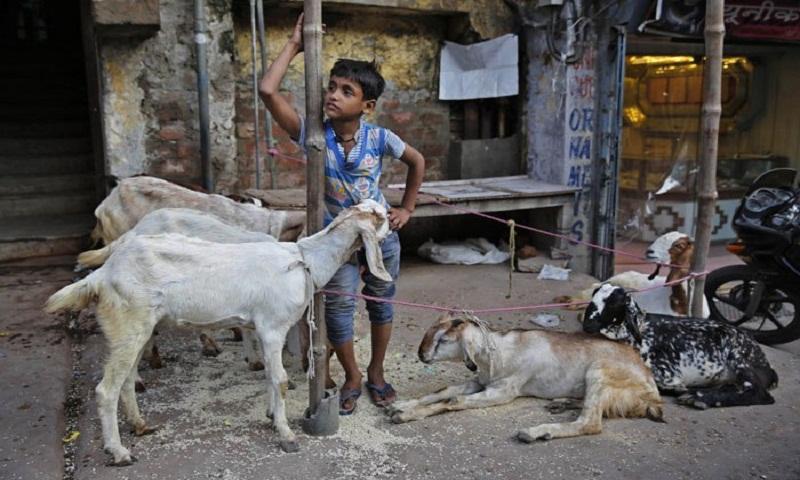 Why do Muslims sacrifice animals on Eid-al-Adha