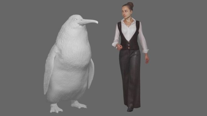 'Human-sized penguin' lived in New Zealand