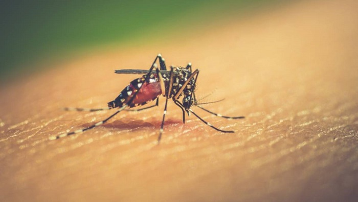 Dengue fever plagues Southeast Asia
