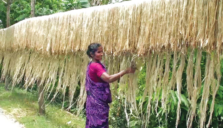Busy drying raw jute fibres