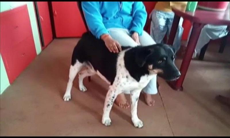 Dog saves human from leopard in Darjeeling