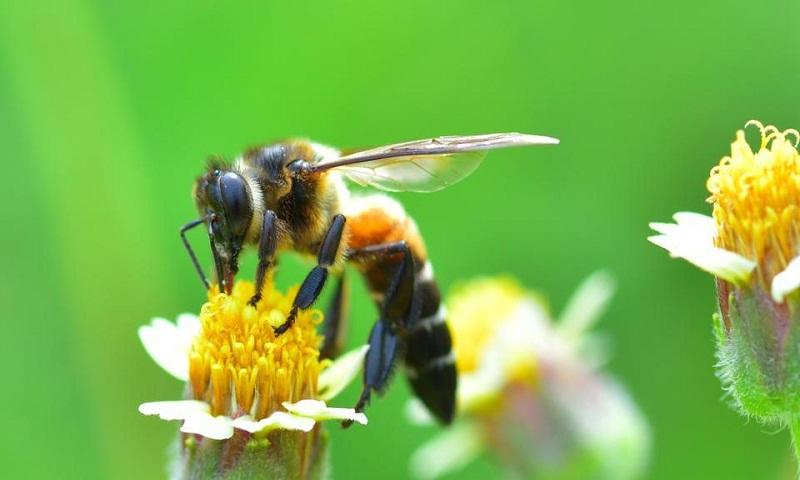 80-year old woman dies in bee attack, 12 injured in India's Tamil Nadu