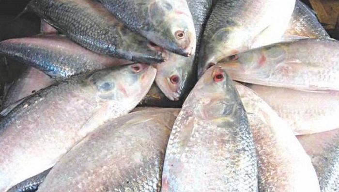 Abundant Hilsa supply brings down prices in Chandpur