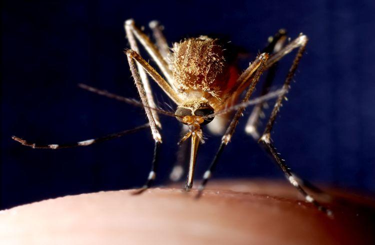 Woman succumbs to dengue at DMCH