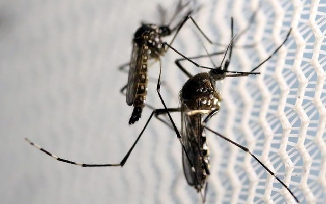53,398 dengue patients return home after recovery