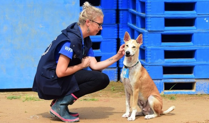 Move over Angelina Jolie, it's 'humanitarian pup'