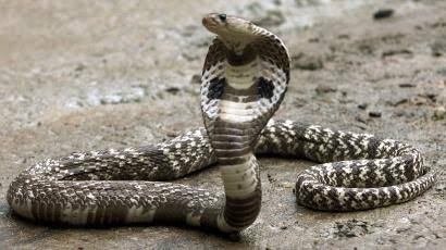 Man dies from snakebite in Satkhira