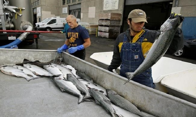 California king salmon rebounds after drought