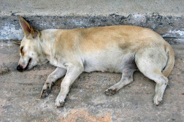 Man arrested for raping female stray dog in India