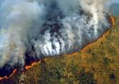France halts Brazil trade deal over Amazon fires